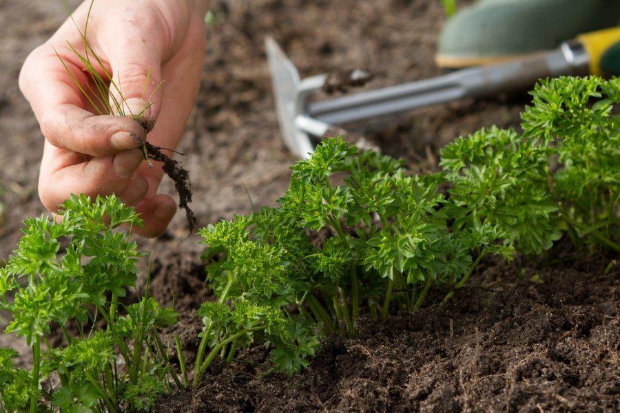 Семпочта средства защиты растений